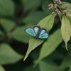 7/5~7/2019・信州の蝶あそび ~ たくさんのシジミチョウに会えました