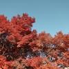 茨城の紅葉