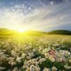 リヒトウェーゼン「季節のエネルギー」