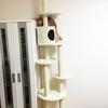猫の上下運動のために天井突っ張り&省スペース&圧迫感が少ないキャットタワーを買ってみた