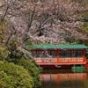 神泉苑の観月会。雨天決行。
