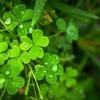 緑色が好きな人、グリーンを選ぶ人の心理状況、傾向、性格を徹底解説♡