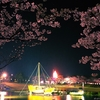 酒田市、夜桜の日和山公園2018-04-14