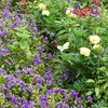 英国風花壇