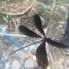 蟻を見つけた日