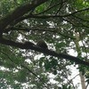 【お散歩記録】Perdana Botanical Garden