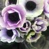 ✴︎ 2018年4月〜 お花教室のお知らせ ✴︎