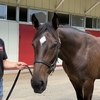 【ワラウカド2019年募集馬】出資済みと様子見 キズナ牡馬2頭を比べてみる。