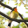 What's migratory birds? 【winter bird, summer bird, resident bird】