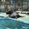天王寺動物園と海遊館をハシゴしてきました