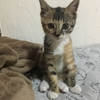 子猫に癒される・・子猫の癒し動画つき♡