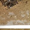 ヘルマンリクガメの床材が減ってきた…