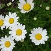 雨の中に咲く花たち
