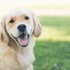 犬と紐やおもちゃを引っ張る遊びをする時の注意