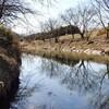 暖かな陽射しを受けて柳瀬川散歩①