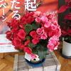 春の花 軽専門店