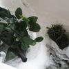 60cm水槽に新しい水草を導入
