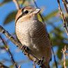 🦜野鳥の回【108】🆕63種類目オカヨシガモ、他バラエティーパック