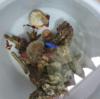 海水水槽の清掃 ~マリンアクアリウム物語~