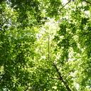 ヒーリング・フォレスト~物語と再生の森から~