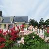 【GARDN大きなくりの木の下で】平川市町居バラの庭園は花盛り
