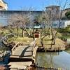 弁天池(千葉県市川)