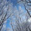 群馬県・黒檜山~駒ヶ岳 (赤城山)(日本百名山)[20/01/11] ~赤城山の最高峰、気軽に登れる花と展望のミニ縦走コース~