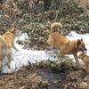 野犬の子ミメと自然