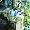 あじさいで有名な揚谷寺行ってきました!赤ちゃん連れは階段で腰がやられます