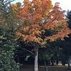 『秋深まっています。』