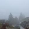 シアトルで霧の日の運転は命がけです!