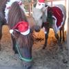 馬たちのクリスマスファッションショー