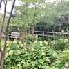 'colorless' garden  + α