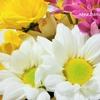 ι✺重陽の節句✺別名/菊の節句