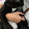 猫を飼いまぁす!アメリカンカールを我が家に迎いいれるぞい。