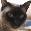 ネコの腎盂腎炎:おしっこが濁ってる?症状と原因