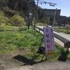 信州 小川村  立屋・番所の桜