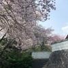 お抹茶&和菓子で散る桜を楽しむ会