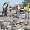 バミューダ・トライアングルの海域フロリダで続く魚大量死/インドでも/アイルランドでは大地の亀裂