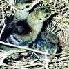 「この世で出会った動物たちの物語3」11月22日