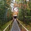 参道と楓の庭の紅葉が有名な大徳寺・高桐院の見所は? (Kyoto, Daitokuji, Koutouin)