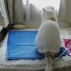 ネットワークカメラを1週間試して猫様の行動を監視した結果