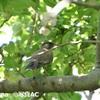 「小鳥のさえずり」が幸福感を押し上げる!? アメリカ・研究