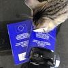 猫飼い駐在員必修!帰国に向けた狂犬病予防接種@ベルギー