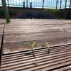 ベランダの床から草が生えてきた! さらに「なぞのキノコ」まで‼︎