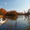 秋色をさがして 大沼公園(1)…