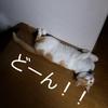 可愛い猫画像!あれ?あの形に似てる?【ペット】