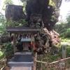 熱海の来宮神社で御神木のパワーをいただこう。