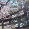 #811 2021年の桜はあっという間