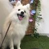 愛犬の法被♡